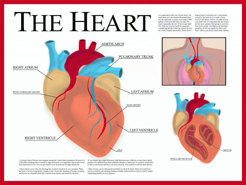 Spotlight On: Heart Failure | I Spy Physiology Blog